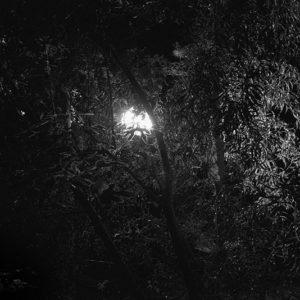 «Ecrire Dessus» #9 par David Sanson – 29 juin 2019 – Les belles goulées 3 juillet 2019 – Le chant des lucioles